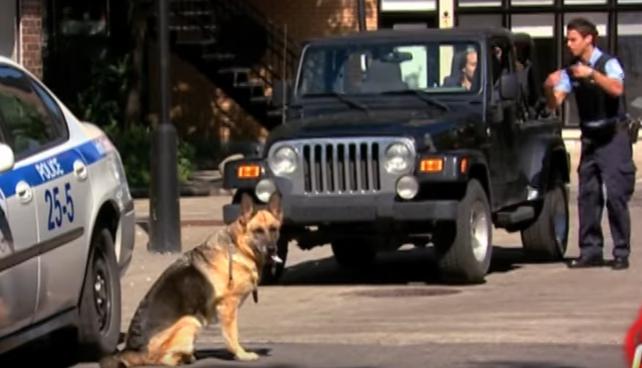بالفيديو : كاميرا خفية مثيرة جدا كلب بوليسي يعصي الأوامر