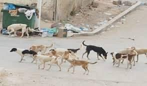 بالصور  ..  بعد الكرك والبلقاء  ..  الكلاب الضالة تهاجم مواطنين في معان