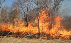 اخماد حرائق أعشاب جافة وأشجار حرجية ومثمرة في عدد من المناطق بمحافظة البلقاء