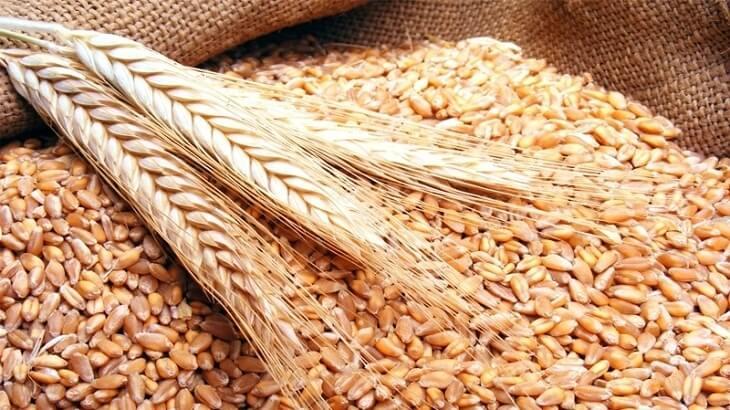 الظهراوي للحكومة : انثروا القمح على رؤوس الجبال