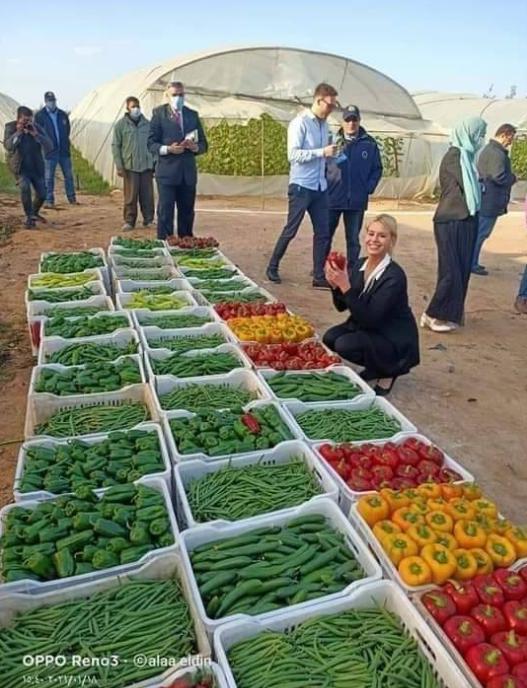 """مصر """"سلة طعام العالم""""  ..  صورة"""