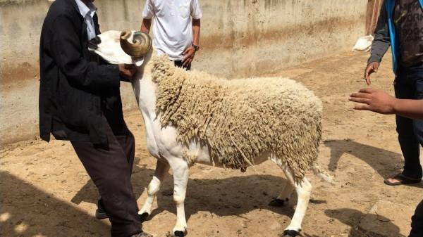 تعرف على أول دولة عربية تدرس إلغاء احتفالات عيد الأضحى بسبب (كورونا)