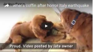 بالفيديو - كلب «وفي» يرفض ترك تابوت صاحبه