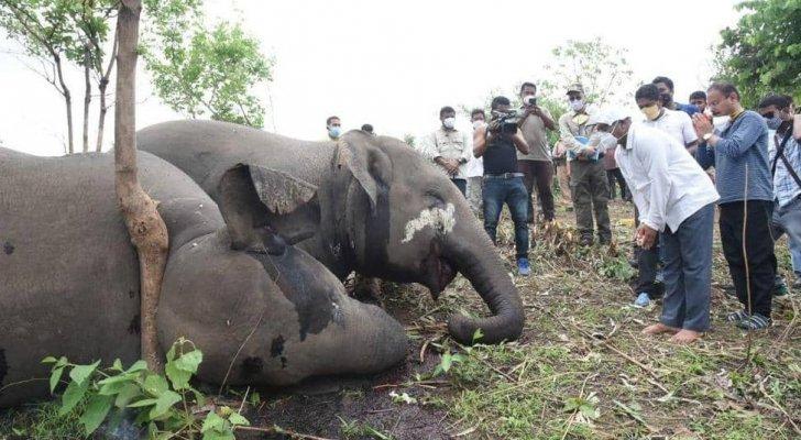 مأساة تفطر القلب: صاعقة برق تقتل 18 فيلا في ثوانٍ - صور