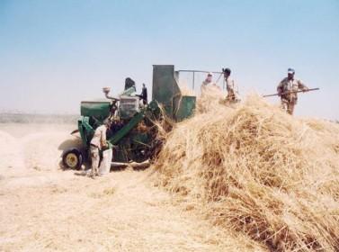 مخزون المملكة من القمح والشعير يغطي استهلاك عام