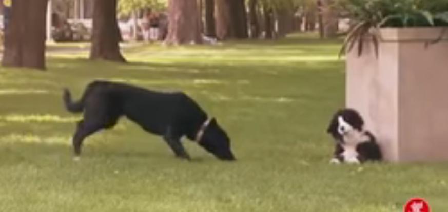 كاميرا خفية للحيوانات مضحكة جدا