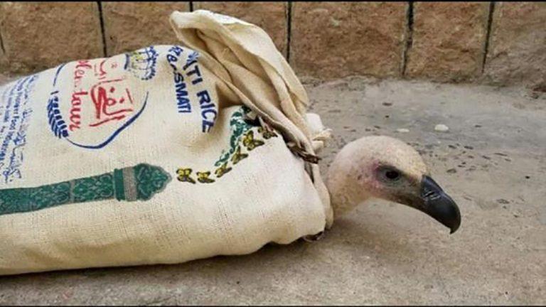 الطائر نيلسون يقع أسيرًا في اليمن بتهمة التجسس