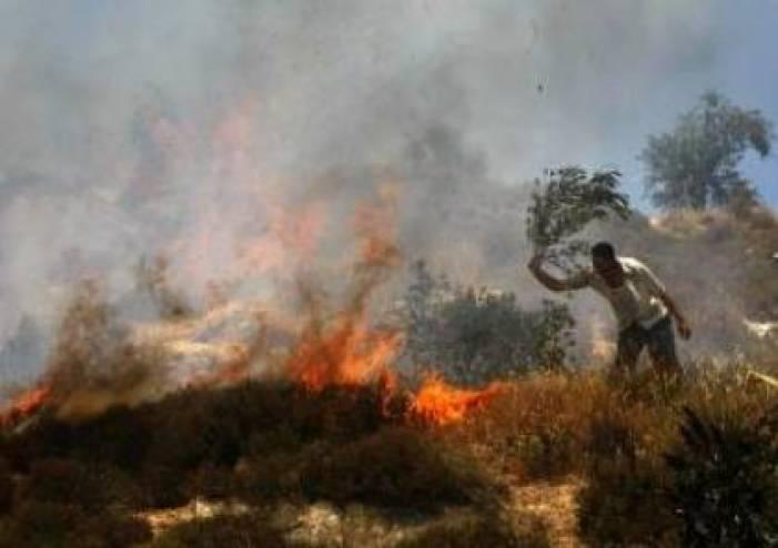 مستوطنون يحرقون 30 دونما جنوب الخليل