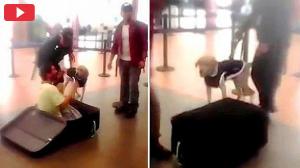 بالفيديو : المسافر الذي أحبط الكلب خطته بتهريب نفسه داخل حقيبة