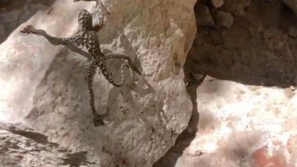 ظهور كائن غريب الشكل وهو يتشبث بذراعيه في صخرة