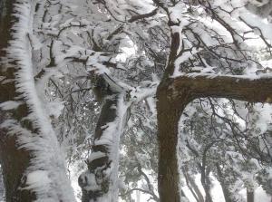 الثلوج تعود مجدداً للمملكة و هذه تفاصيل المرتفعات التي ستقصدها