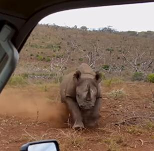 """بالفيديو  ..  امرأة """"تتحدى"""" وحيد القرن ..  وهذا ما حصل لها"""