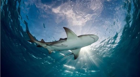 شاطئ بأستراليا يفتح أبوابه مجدداً بعد وفاة رجل جراء هجوم سمكة قرش