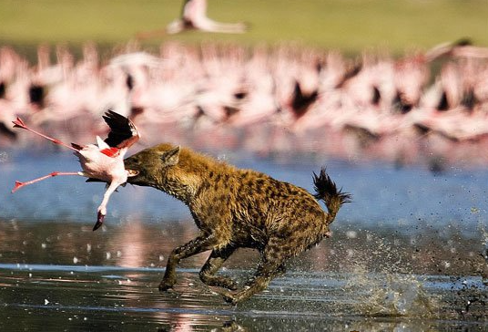 من الضبع إلى الدحرجة إلى الطائر الضخم ..  نظريات المسؤولين عندما يعجزوا عن الرد