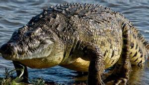 اكتشاف تمساح مرعب بطول 30 قدمًا