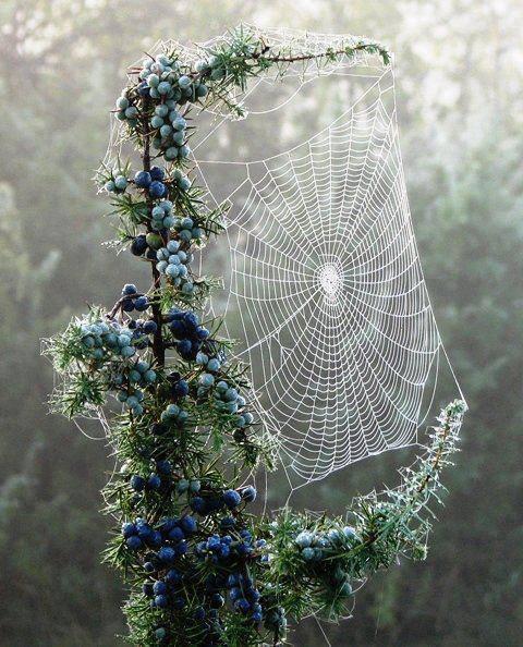 تفسير رؤية العنكبوت في الحلم