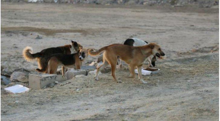 لن تصدق  .. كلاب ضالة تأكل طفلاً رضيعاً حياً بعدما القته والدته في الغابة داخل كيس بلاستيكي بتايوان