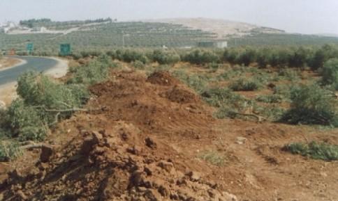 تجريف وقطع الاشجار الحرجية والمثمرة  بشكل مجحف في لواء بني كنانة