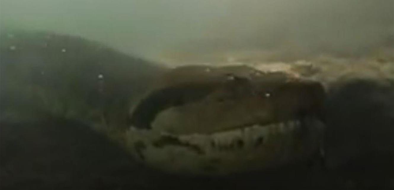 بالفيديو  ..  لحظات مرعبة .. غواص يواجه ثعبان أناكوندا طوله سبعة أمتار!