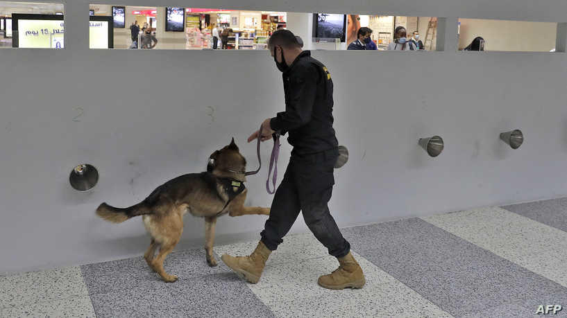 استخدام الكلاب بالمطارات للكشف عن كورونا