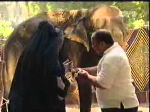 بالفيديو ..  زكيه زكريا  مقلب الفيل من اجمل المقالب المضحكة