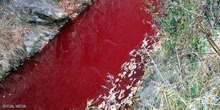"""شاهد ..  نهر يتحول إلى الأحمر القاني ..  والسبب """"دماء الخنازير"""""""