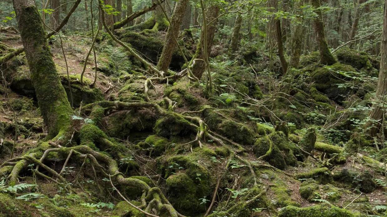 أربعيني ينجو من غابة التماسيح بأعجوبة