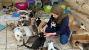 """بالصور  ..  تصفهم بـ""""أبنائها"""" ..  مغربية تحول منزلها إلى مأوى للقطط"""