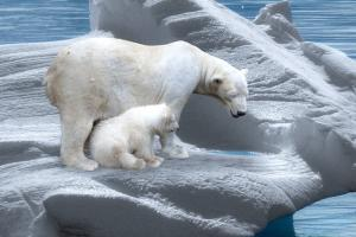 بالصور .. 7 تغيرات ستشهدها الأرض عند ذوبان القمم القطبية المتجمدة