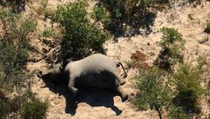 عدوى الموت المفاجئ للأفيال تنتقل إلى دولة أخرى