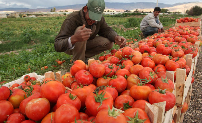 مزارعون متنقلون ..  تحصيل الرزق على هامش الاقتصاد الرسمي