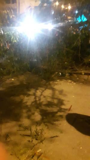 بالصور ..  تحطم إشارة ضوئية بسبب سقوط شجرة بفعل قوة الرياح في عجلون