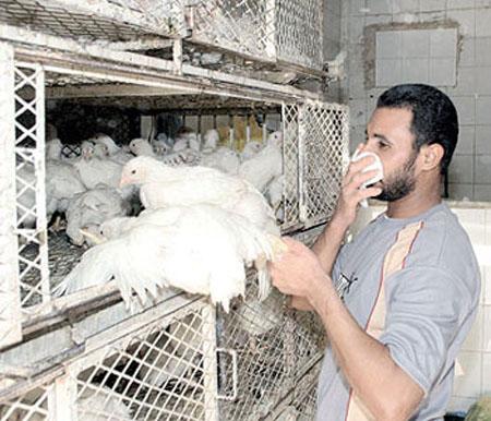تحذير اممي من مخاطر تعرض العالم لتفشي إنفلونزا الطيور مجدد