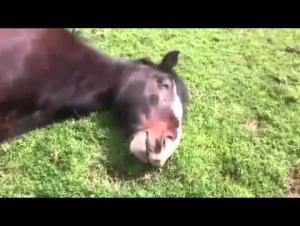 بالفيديو.. حصان أصبح نجماً على مواقع التواصل!