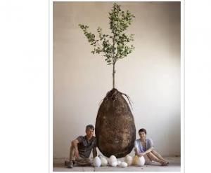 بالفيديو ..  اختراع جورب يحول جسدك إلى شجرة بعد الوفاة
