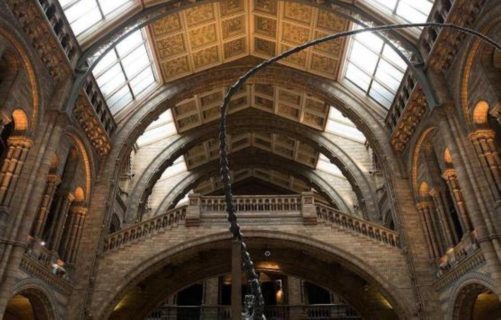 """في لندن ..  أغرب ما يقتنيه متحف في العالم """"تفاصيل"""""""