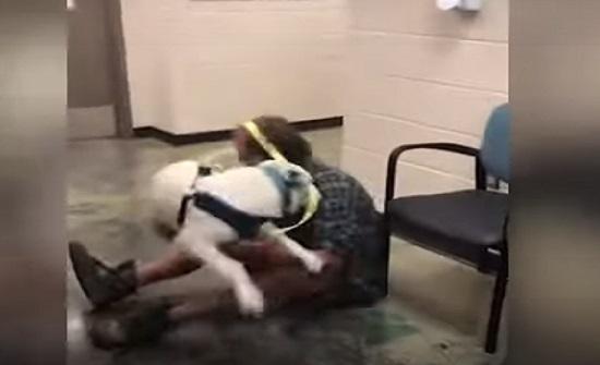 بالفيديو : شاهد ردة فعل كلب اجتمع مع مالكه بعد فقدانه