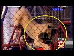 بالفيديو .. أسد ينقض على امرأة  خلال عرض للسيرك