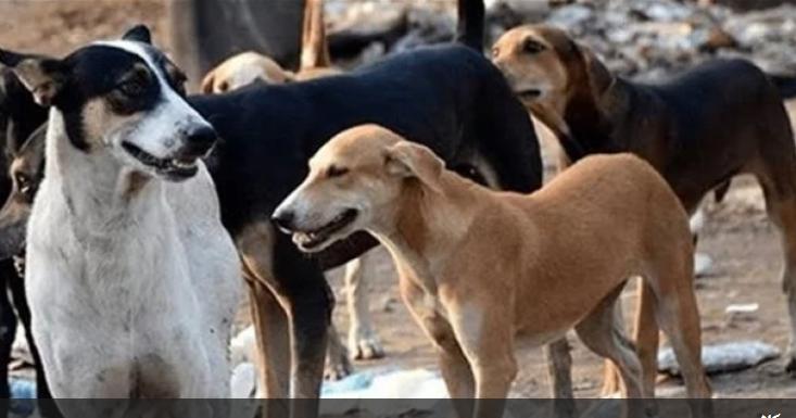 بالفيديو  ..  على مكتب أمين عمان .. إلى متى ستستمر نداءات المواطنين لوقف الكلاب الضالة؟ حي عدن يستغيث