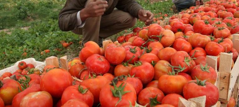 مزارعون يؤكدون ضرورة حماية ودعم القطاع الزراعي في وادي الأردن