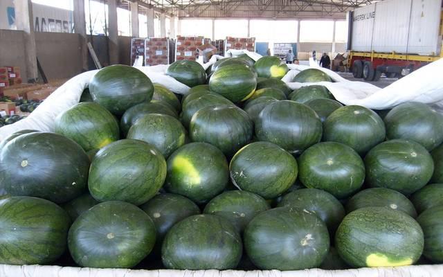 الأردن يصدر 7649 طن من البطيخ لدول الخليج
