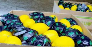 """شحنة الليمون """"الصينية"""" ..  تطورات تنذر بسحبها من الأسواق بعد ثبوت التلاعب ببلد المنشأ"""