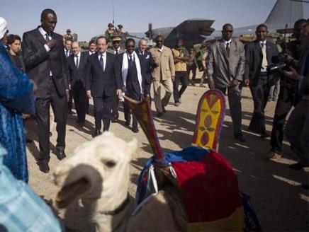 """جمل عربي """"مسروق"""" هدية سلطات مالي لرئيس فرنسا"""
