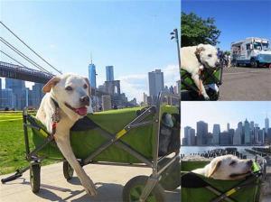 بالصور: رجل يصطحب كلبه المريض في رحلة وداع