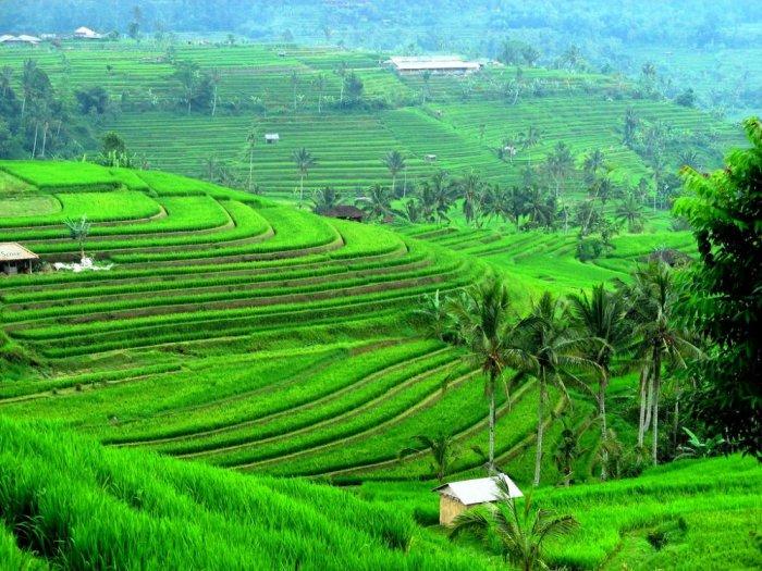 بالصور ..  أجمل المناظر الطبيعية في بالي