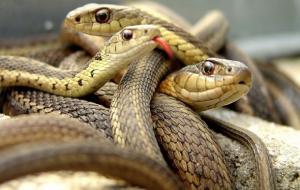 السجن تسع سنوات لرجل في زيمبابوي يأكل لحم الثعابين