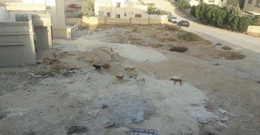أهالي منطقة الزواهرة يشكون من وجود كلاب ضالة  .. والمومني لسرايا :نتابع الامر عن كثب