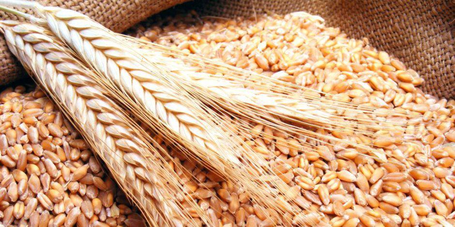 """""""الزراعة"""" تبدأ باستلام وشراء الحبوب المحلية  ..  الاحد"""