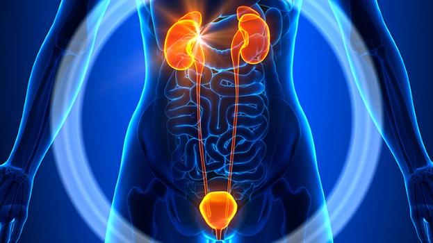 تعرف على خطوة بسيطة تحمي من التهاب المسالك البولية