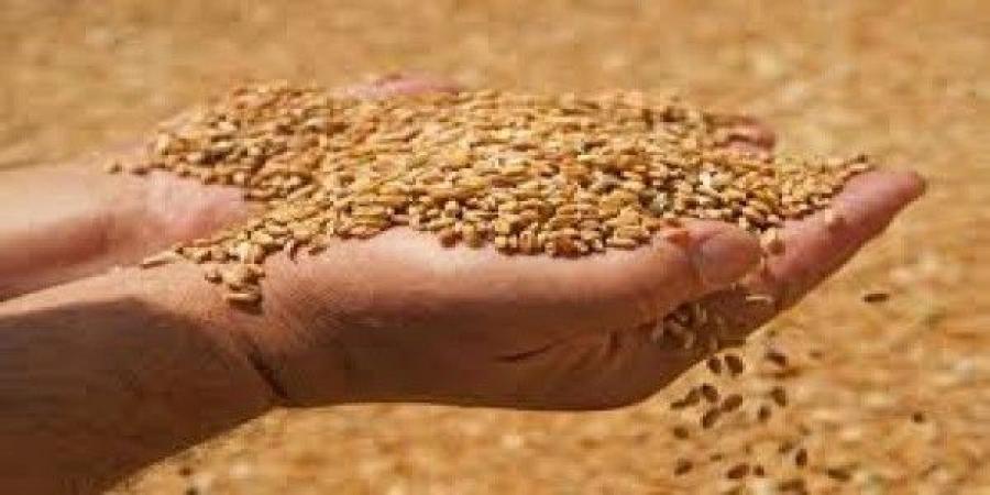 الاردن يستلم شحنة القمح الثانية  بقيمة 18.7 مليون دولار